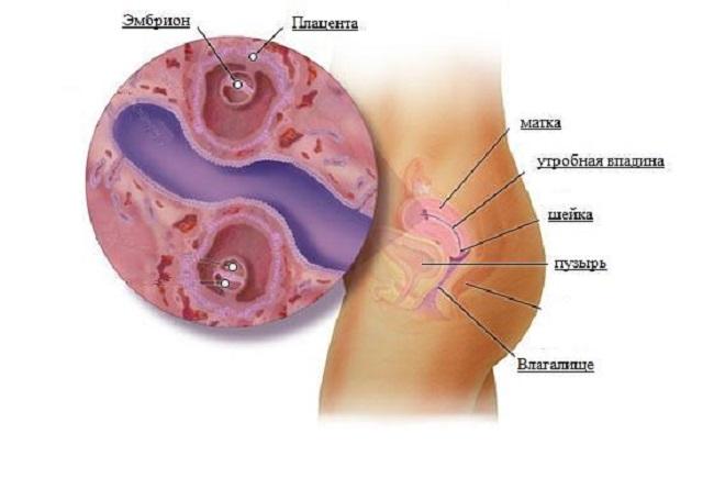 Этапы беременности от зачатия