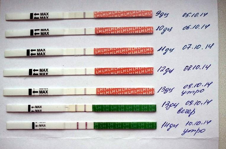 На каких сроках пользуются тестом на беременность