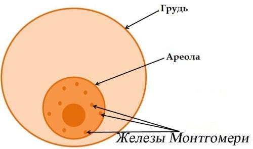 transi-v-habarovske-seychas