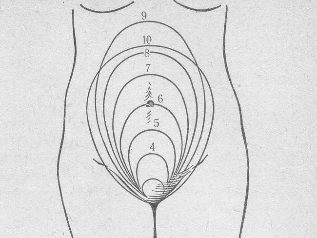Размер матки при беременности