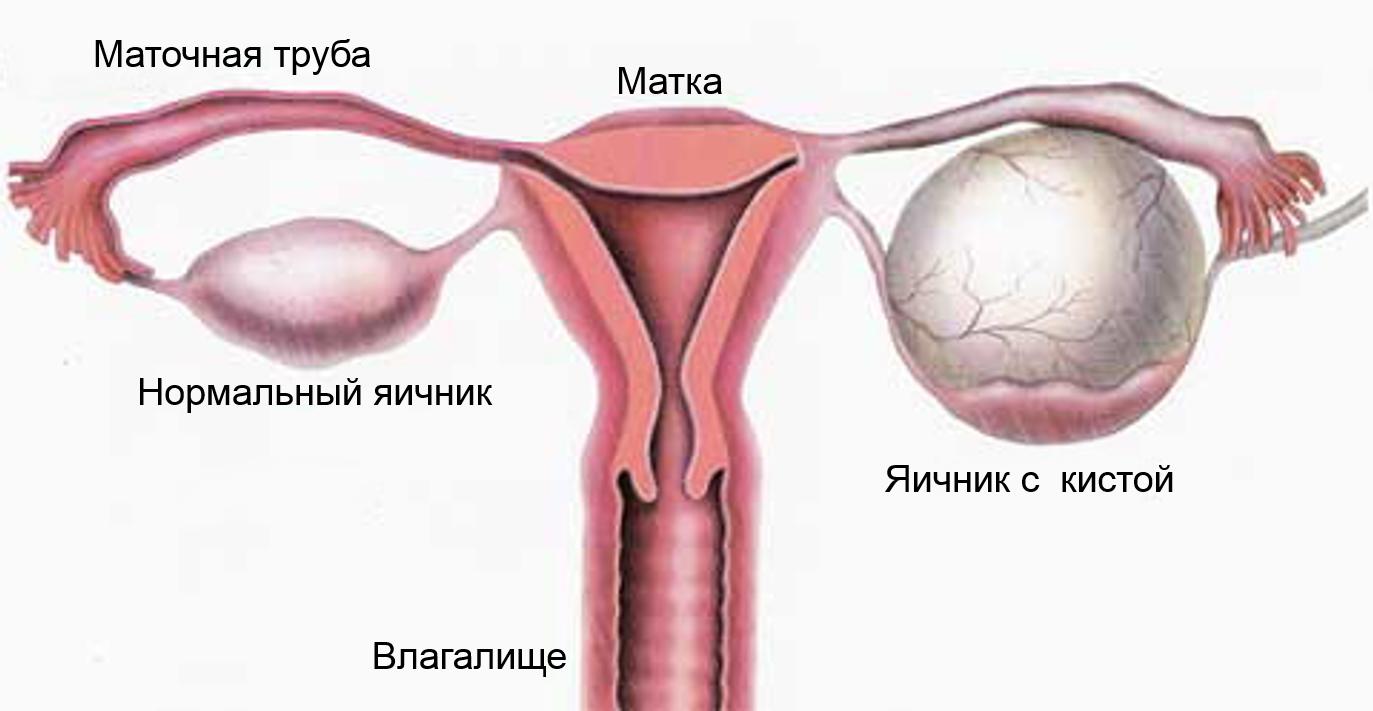 Состояние беременности на ранних сроках