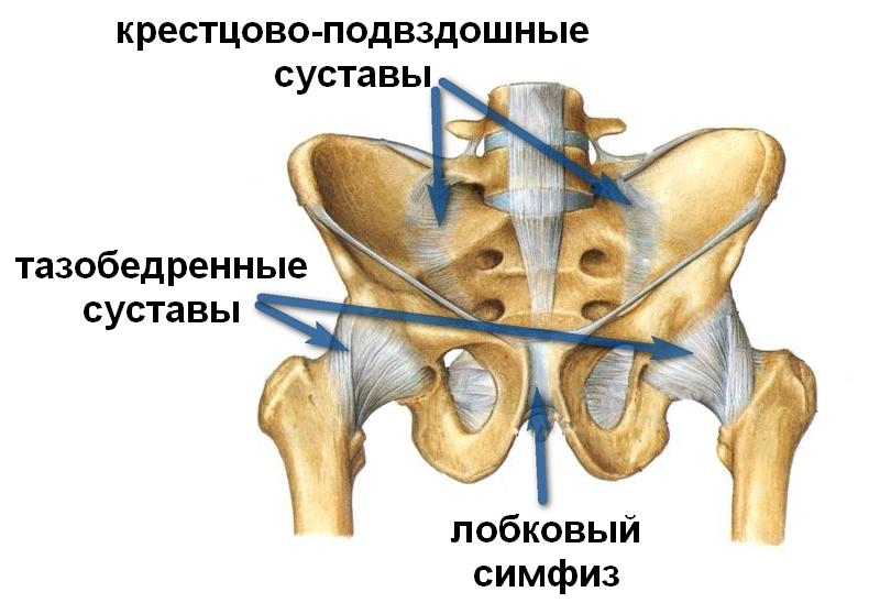 Почему болят при беременности тазовые кости