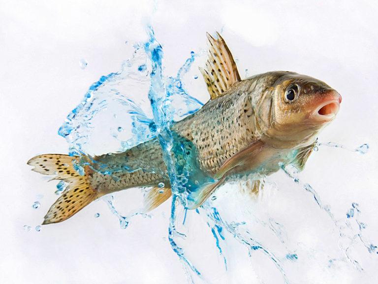 поймать рыбу на удочку к беременности