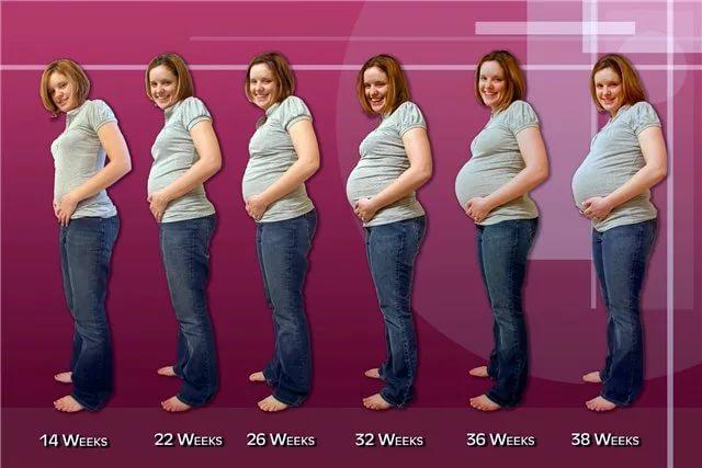 Второй семестр беременности сколько недель