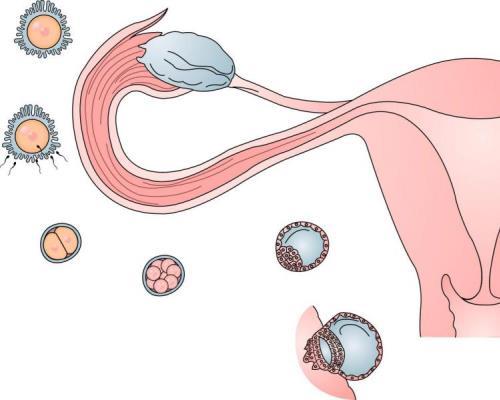 Стимуляция овуляции. Препараты для стимуляции овуляции. Схема стимуляции овуляции — Беременность. Беременность по неделям.