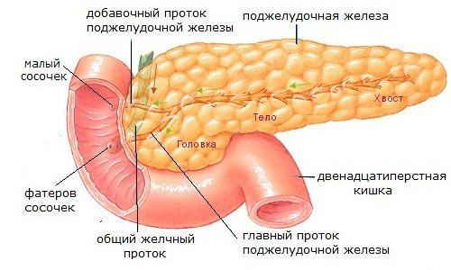Признаки панкреатита у беременных женщин