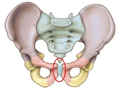 болят кости между ног но не беременна